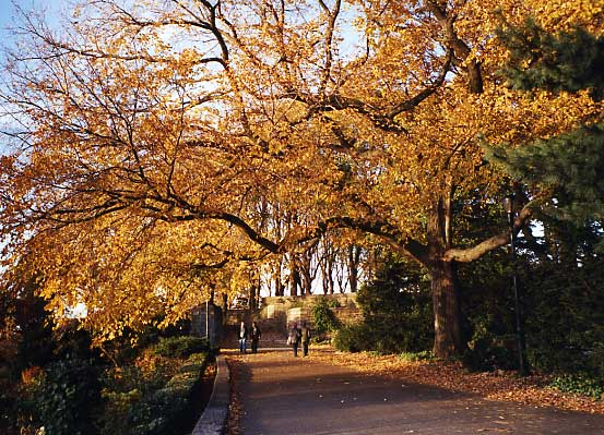 Autumn in Fort Tryon Park, New York, USA
